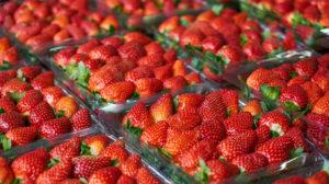 Erdbeeren in Plastikschalen