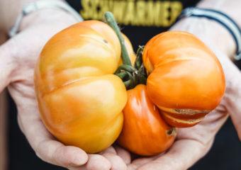 Tomate mit Schönheitsfehler
