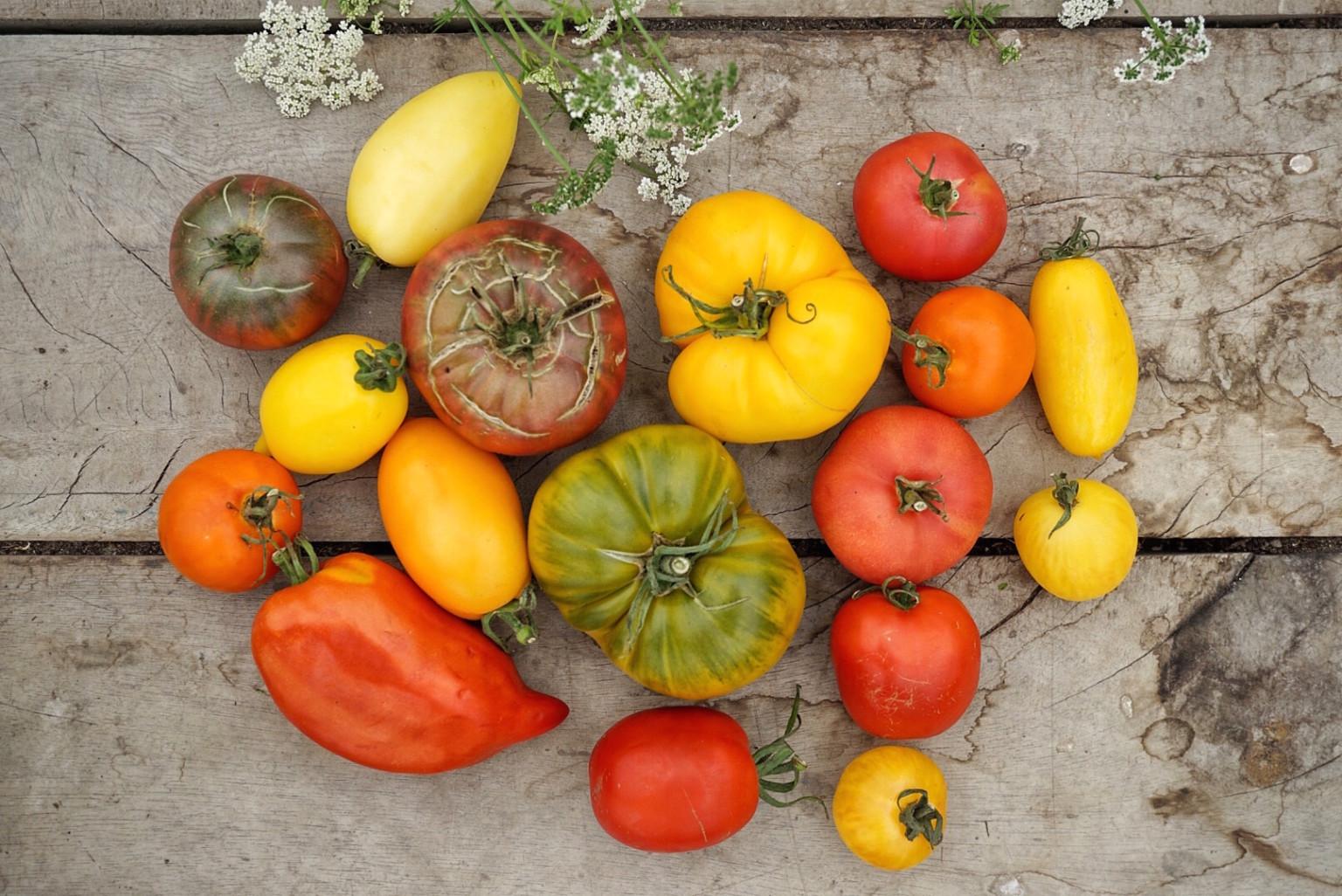 Sauce aus bunten Tomaten