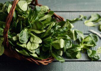 Feldsalat ist saisonal im März